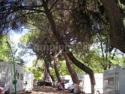 Campsite Osuna